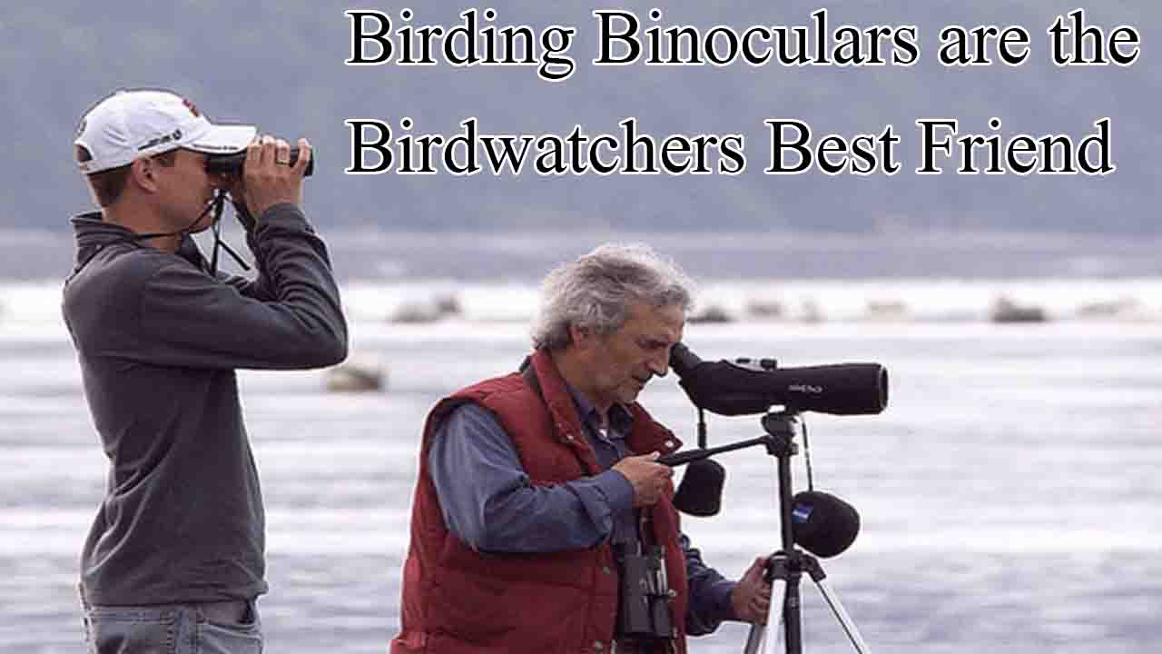 Birding Binoculars are the Birdwatchers Best Friend